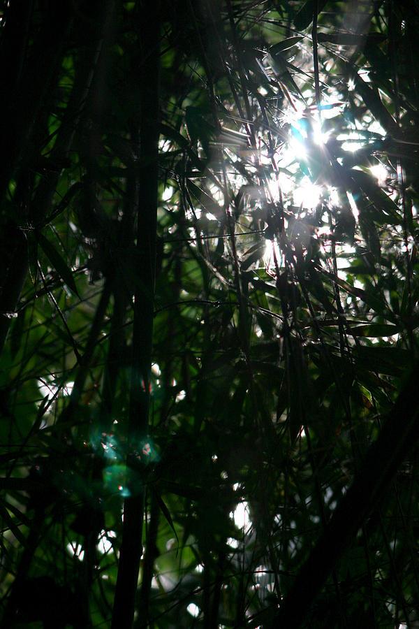 Landscape Photograph - Jungle Light by Brad Scott