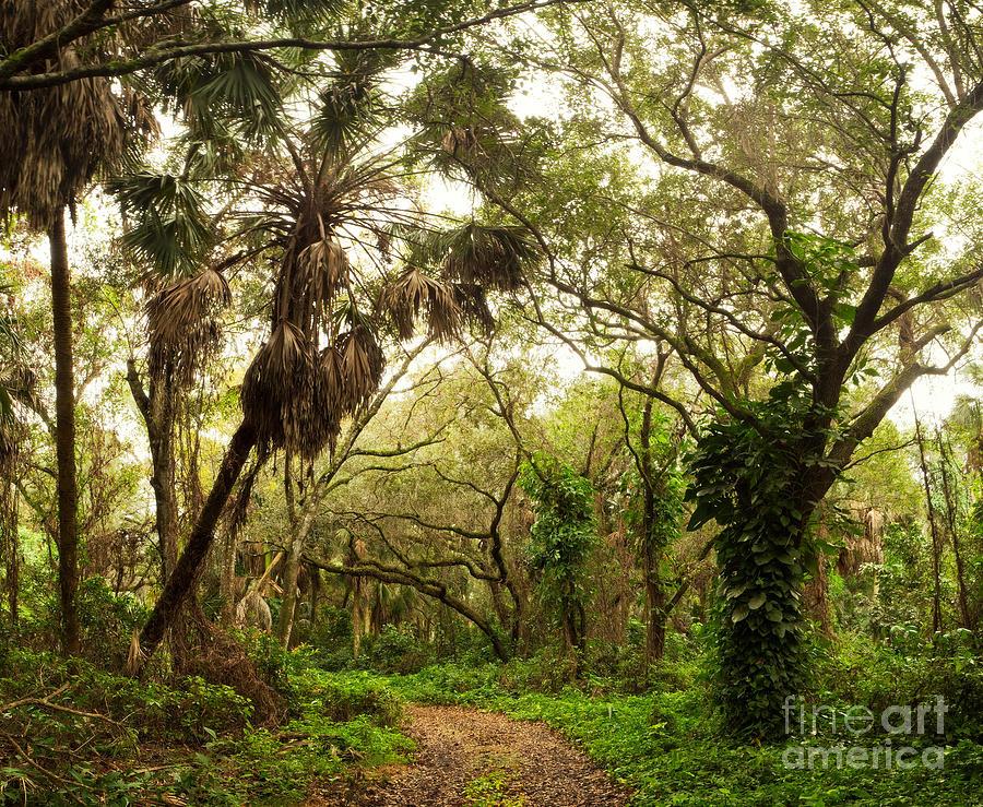 Florida Photograph - Jungle Road in Floridas Outback by Matt Tilghman