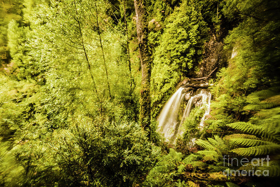 Jungle Photograph - Jungle Steams by Jorgo Photography - Wall Art Gallery
