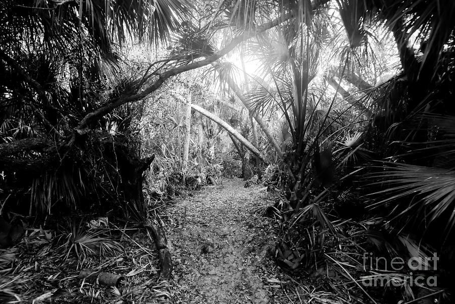 Jungle Photograph - Jungle Trail by David Lee Thompson