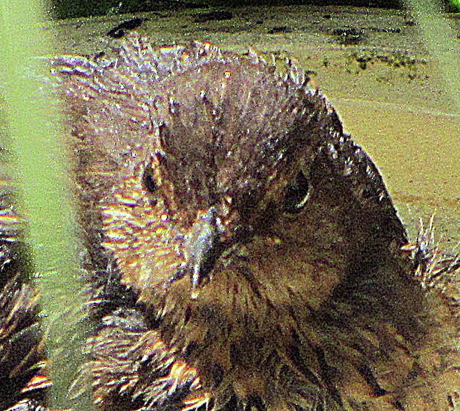 Bird Photograph - Juniper Choke by Helmut Rottler