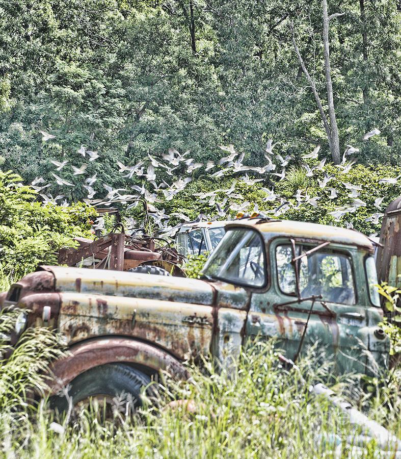 Yard Pickup Truck Photograph by Cheryl Auditor