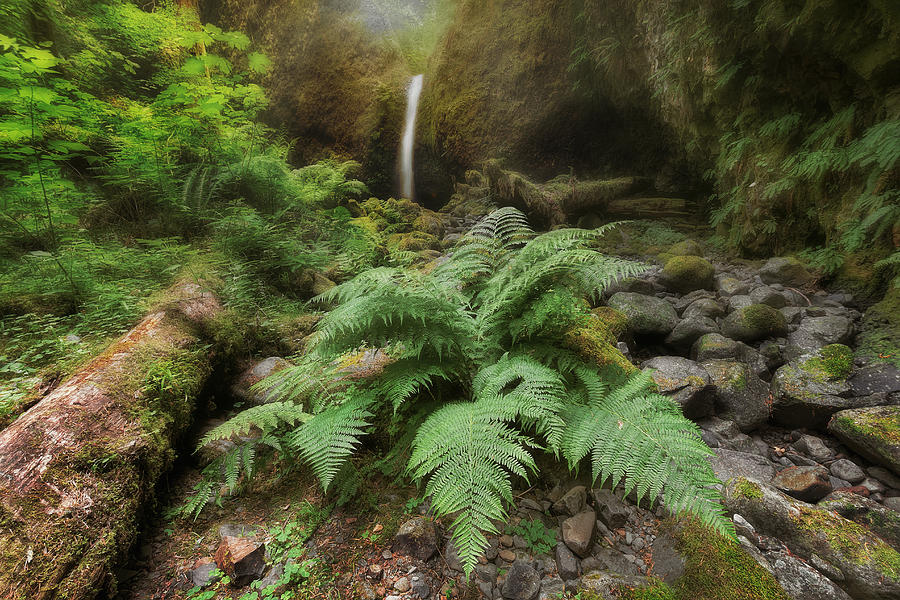 Bracken Fern Photograph - Jurassic Forest by David Gn