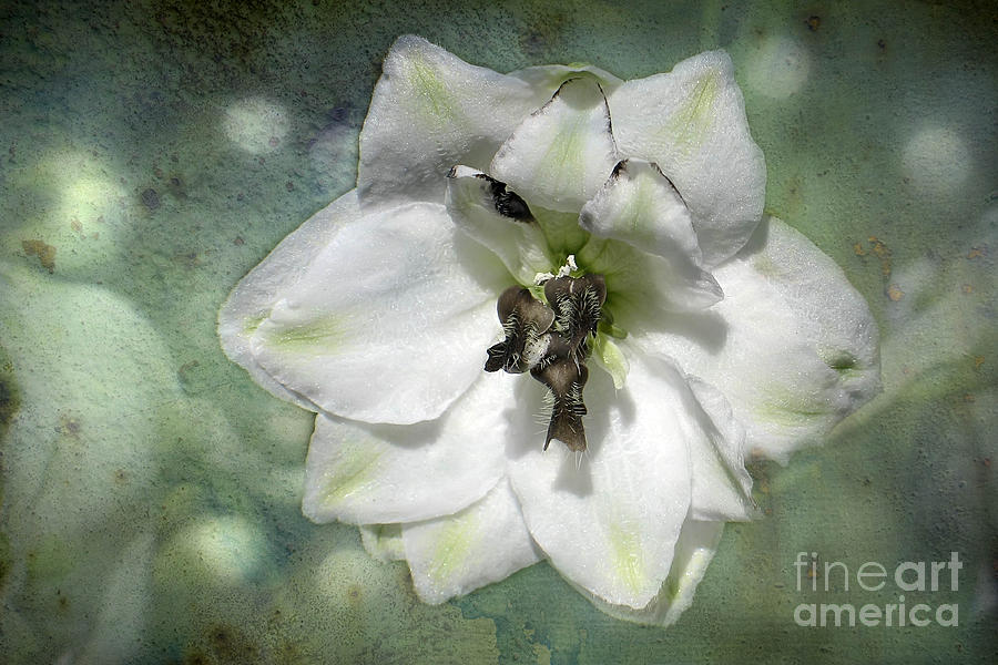 Flower Photograph - Just A Flower by Teresa Zieba