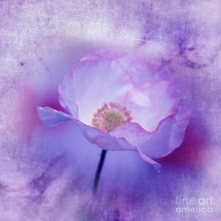 3d Digital Art - Just A Lilac Dream -3- by Issabild -