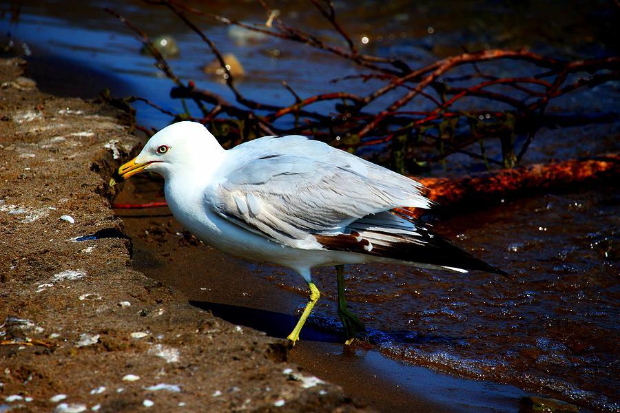 Bird Photograph - Just A Stroll by Amanda Struz