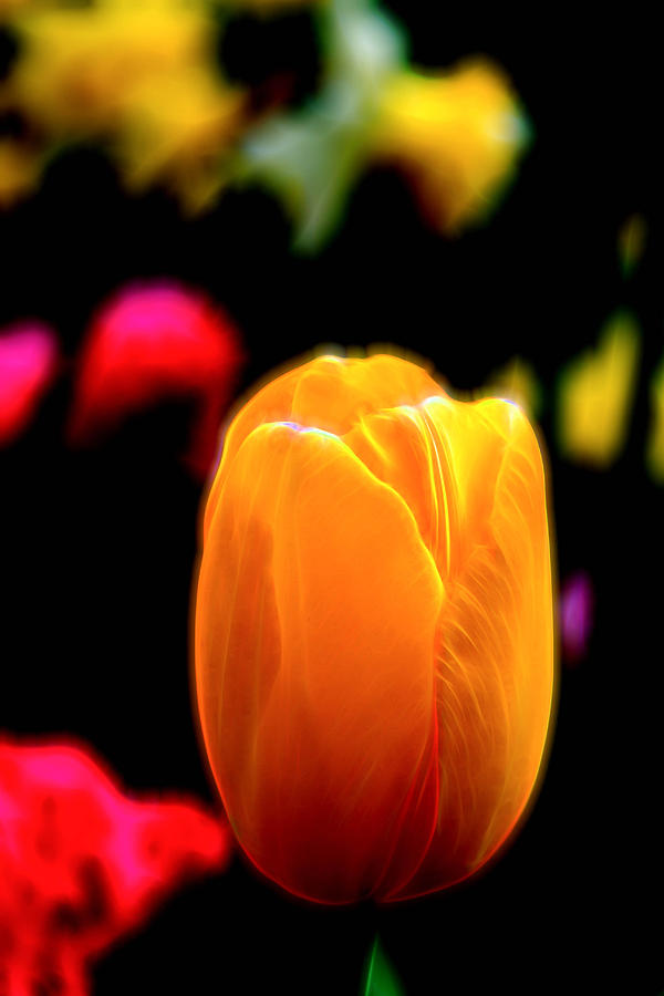 Just a Tulip by Kevin McClish