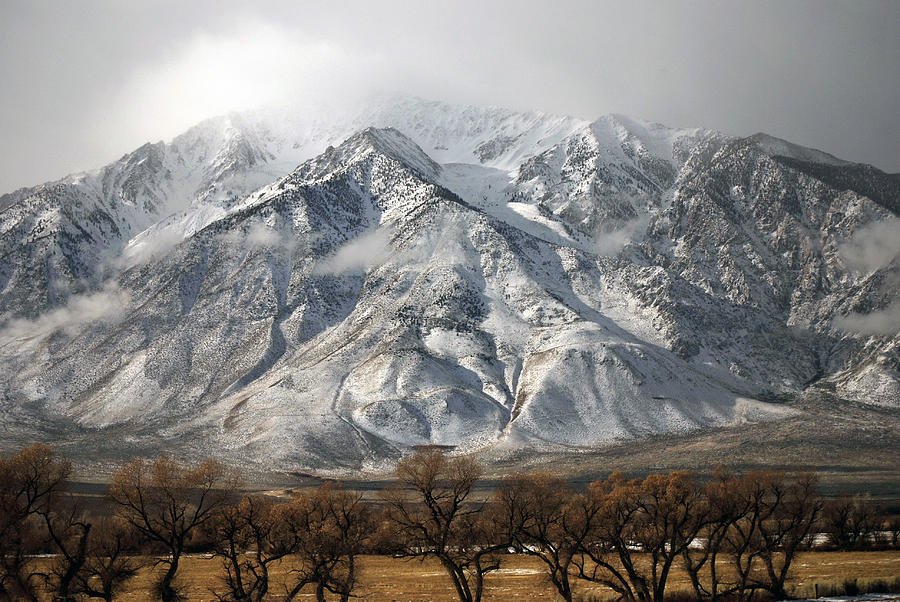 Snow Photograph - Just Above The Tree Tops by Carol Barona