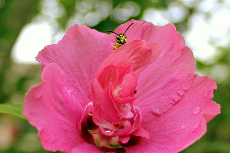 Flowers Photograph - Just Checkin by Deborah  Crew-Johnson