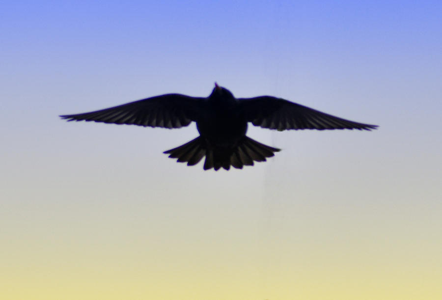Bird Photograph - Just Flying By by Bill Cannon