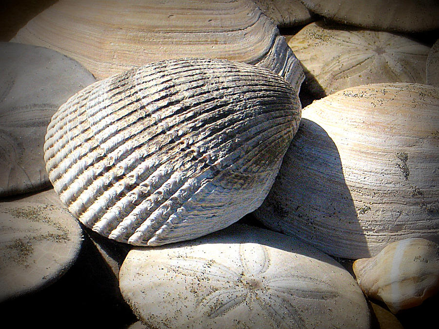 Shells Photograph - Just Found by Mg Blackstock