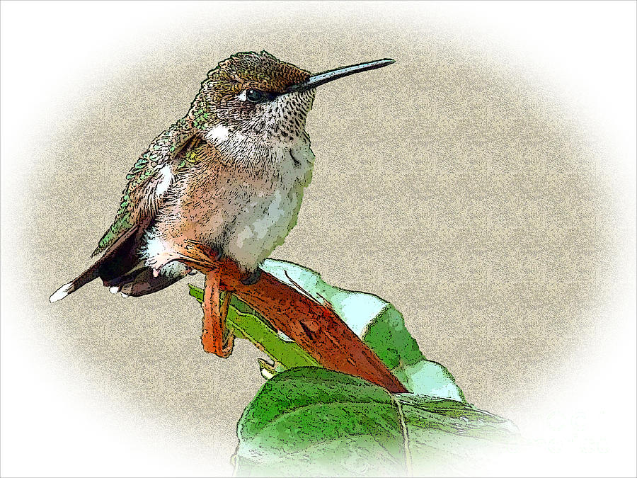 Hummingbird Photograph - Just Hangin Out by Sue Melvin