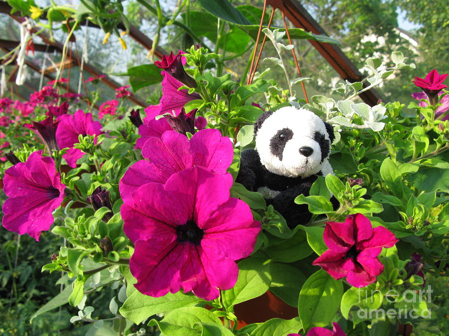 Baby Panda Photograph - Just Hanging In There by Ausra Huntington nee Paulauskaite