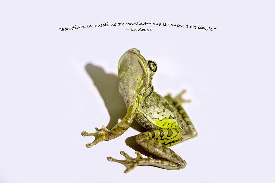 Frog Photograph - Just Look Up by Louise Hill