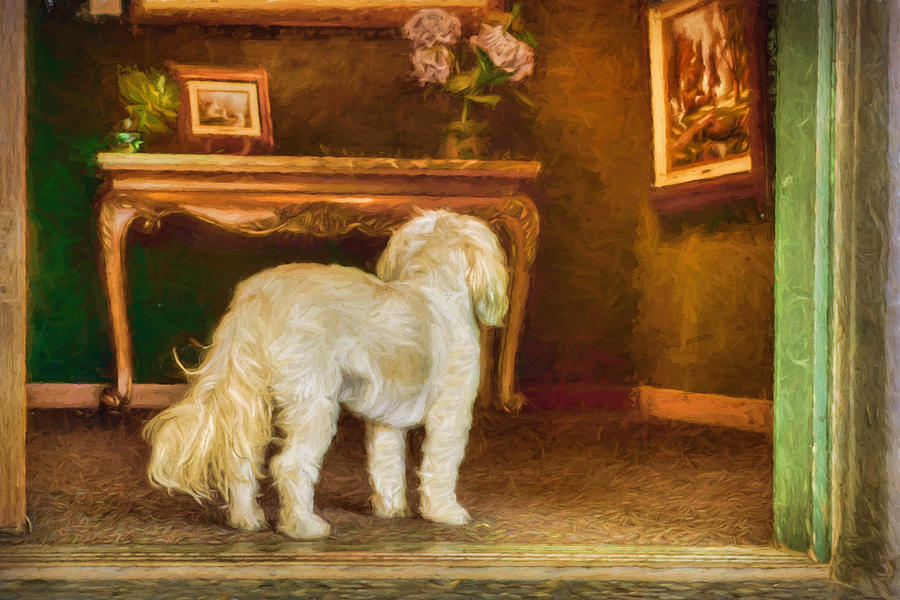 Dogs Photograph - Just Looking by Nikolyn McDonald