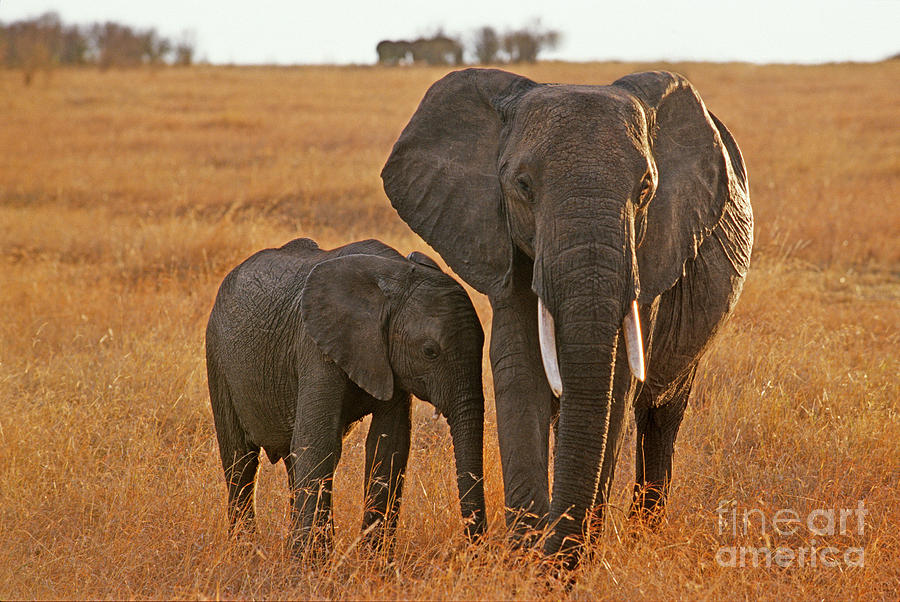 Africa Photograph - Just Mom And Me by Sandra Bronstein