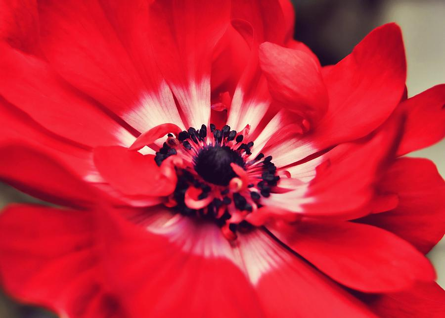 Red Photograph - Just Red by JAMART Photography