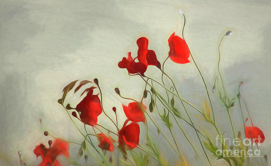Just some poppies by Dominique Guillaume