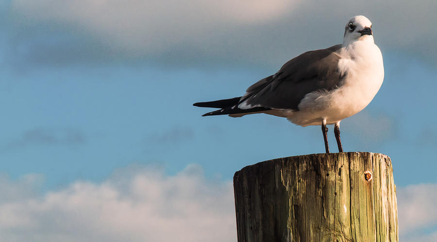 Sea Gull Photograph - Just Standing On The Dock by Phillip Burrow