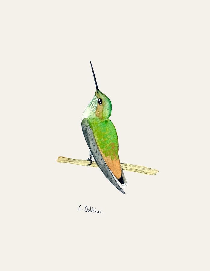 Hummingbird Painting - Juvenile Allens Hummingbird by Christiane Dobbins