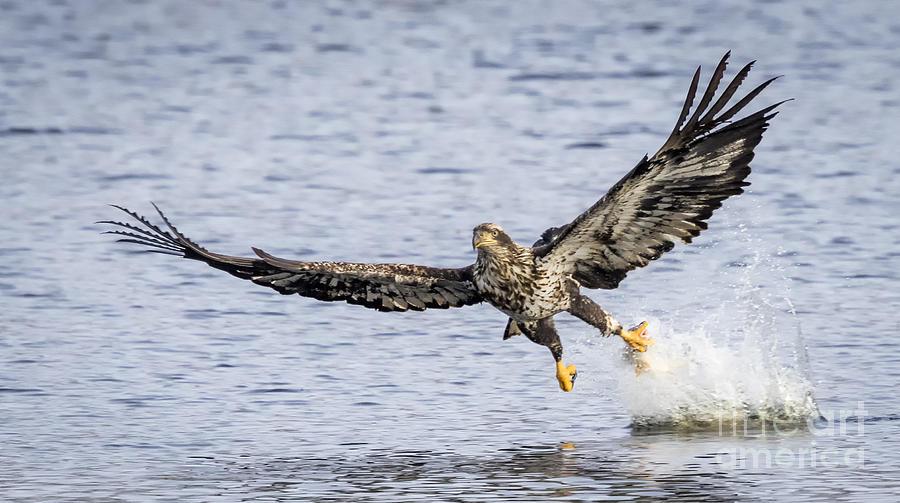Canon Photograph - Juvenile Bald Eagle Fishing by Ricky L Jones