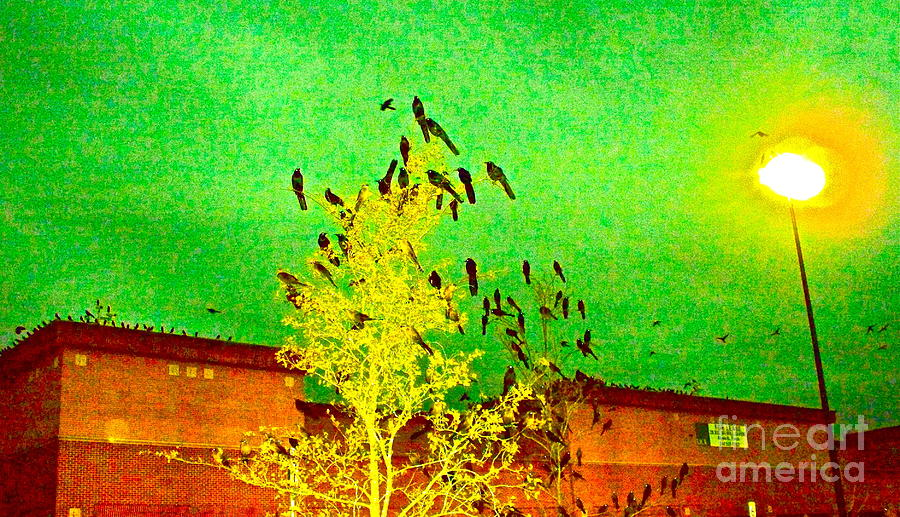 Black Birds Photograph - Kafka Summons His Birds To The Castle by Chuck Taylor