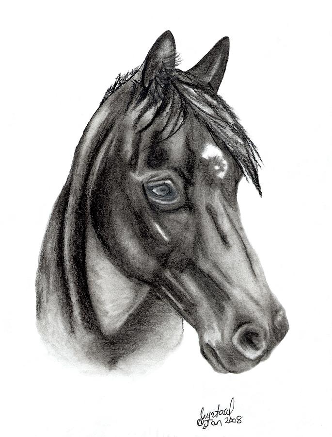 Horse Drawing - Kahnali by Crystal Suppes