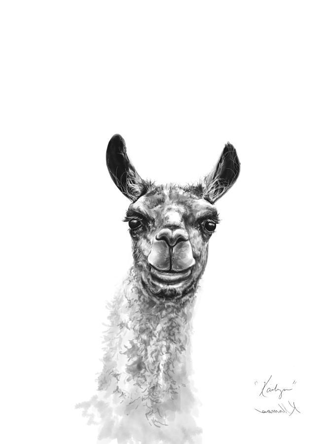 Llamas Drawing - Kailyn by K Llamas