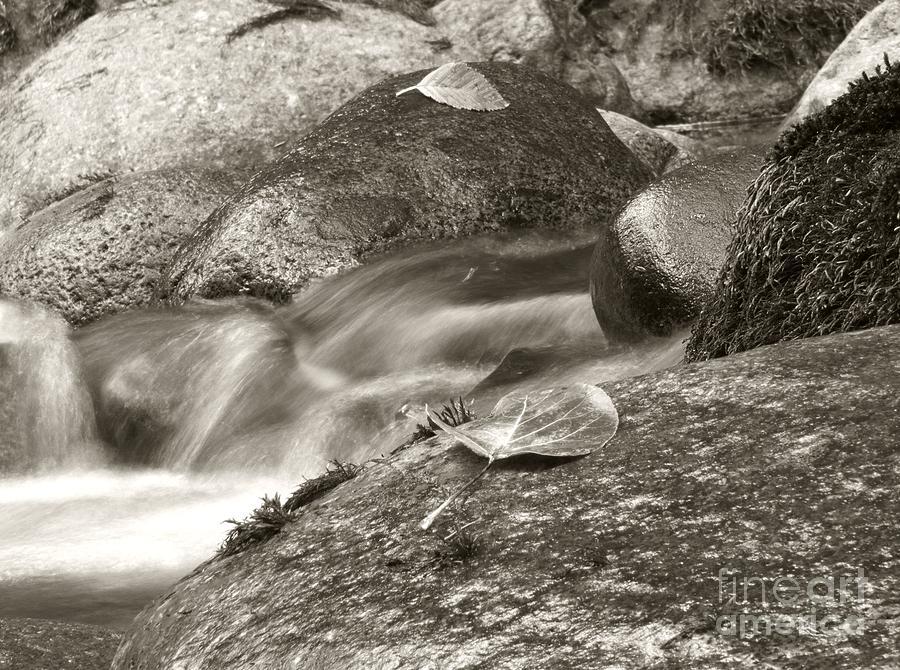 Black And White Photograph - Kanaka Creek Bw by Sharon Talson