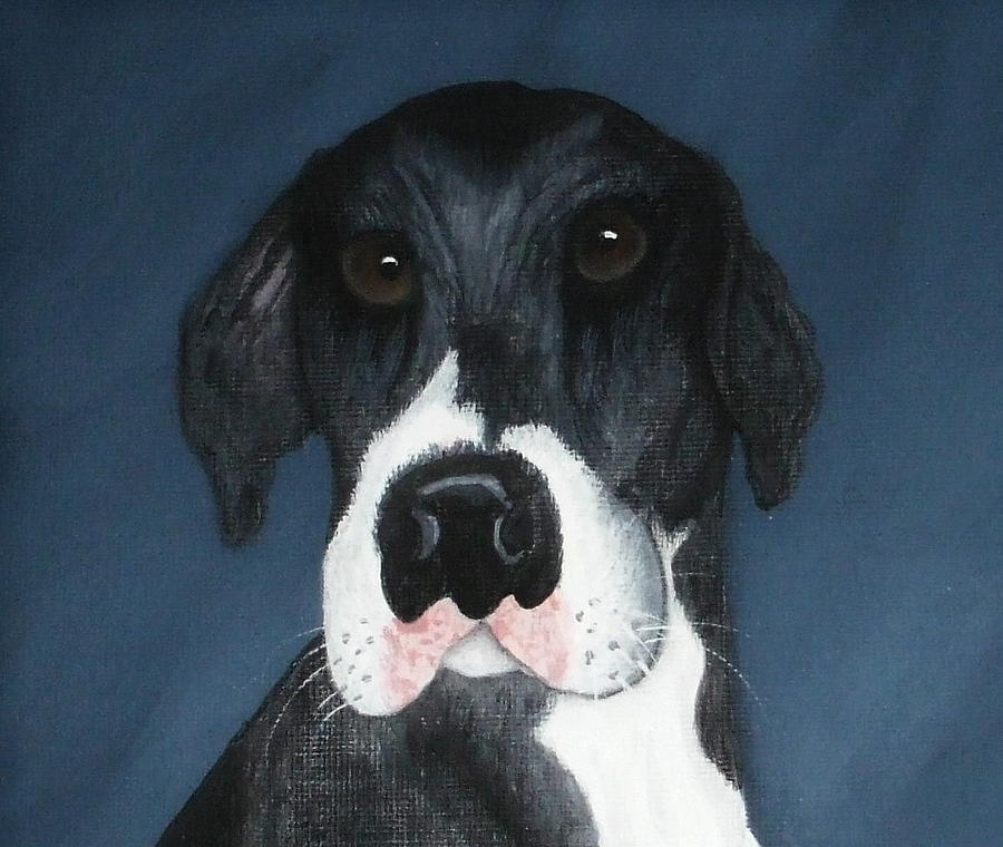 Great Danes Painting - Kane by Rebecca  Fitchett