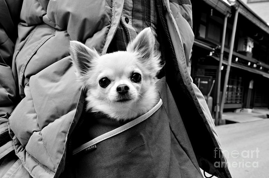Dog Photograph - Kangaroo Dreams by Dean Harte
