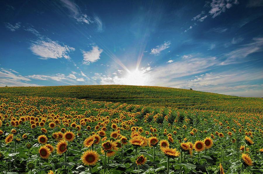 Kansas Dreams by Josh Spengler