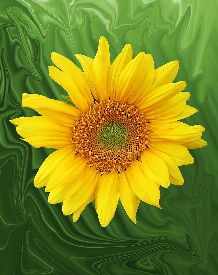 Sunflower Photograph - Kansas Sunflower by Jim  Darnall