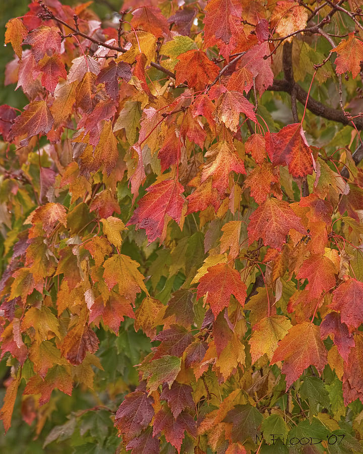 Fall Photograph - Kates Leaves by Michael Flood