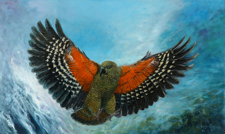 Parrot Painting - Kea New Zealand by Peter Jean Caley