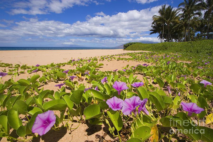 Beach Photograph - Keawakapu Beach by Ron Dahlquist - Printscapes