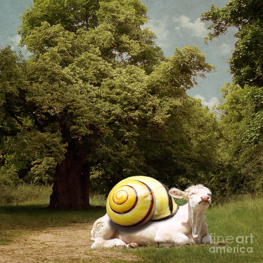 Cow Photograph - Keep Calm And Relax by Martine Roch