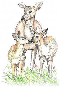 Deer Painting - Keep It Together by Terri Kilpatrick