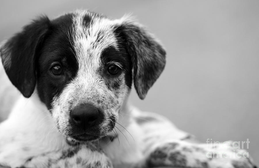 Dog Photograph - Keep Me by Amanda Barcon