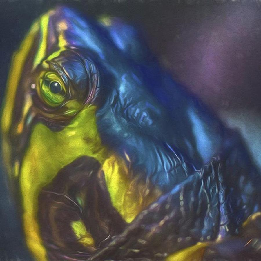 Turtle Photograph - Keep Your Head Up Says Tupac.  Hey Bugs by David Haskett II