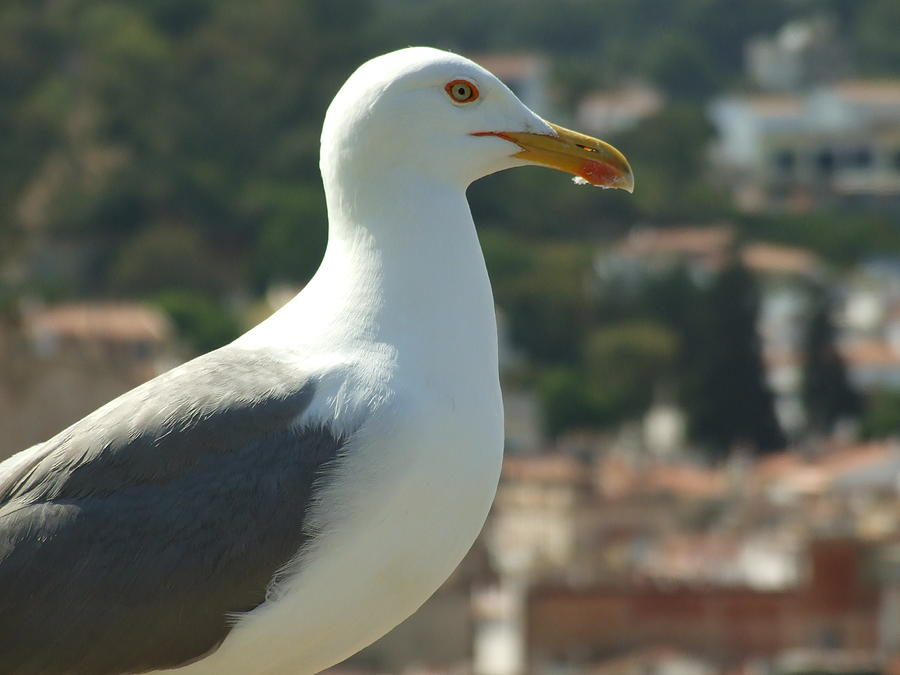 Seagull Photograph - Keeper Of The Citadel by Dorin Emanoil Pirvu
