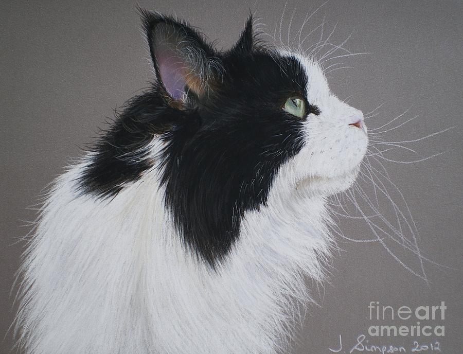 Maine Coon Pastel - Keeps - Maine Coon by Joanne Simpson