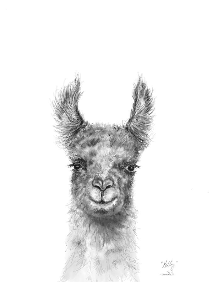 Llamas Drawing - Kelly by K Llamas