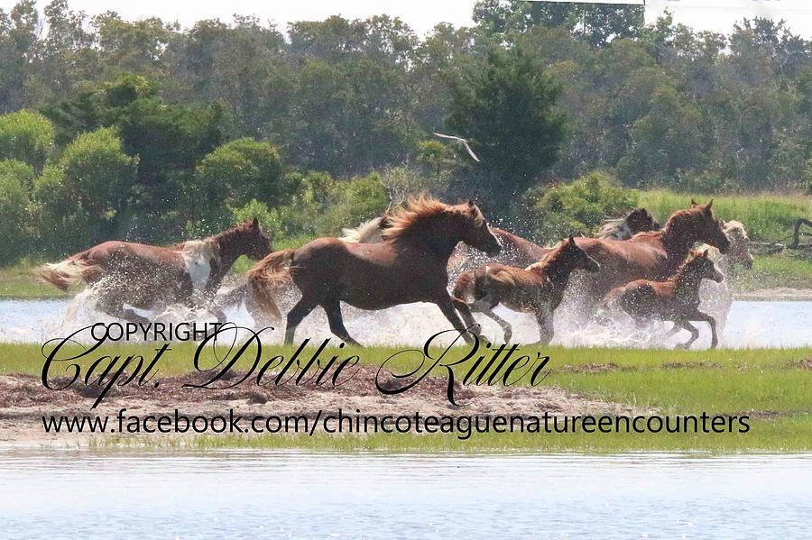 Wild Stallion Photograph - Ken Splash by Captain Debbie Ritter