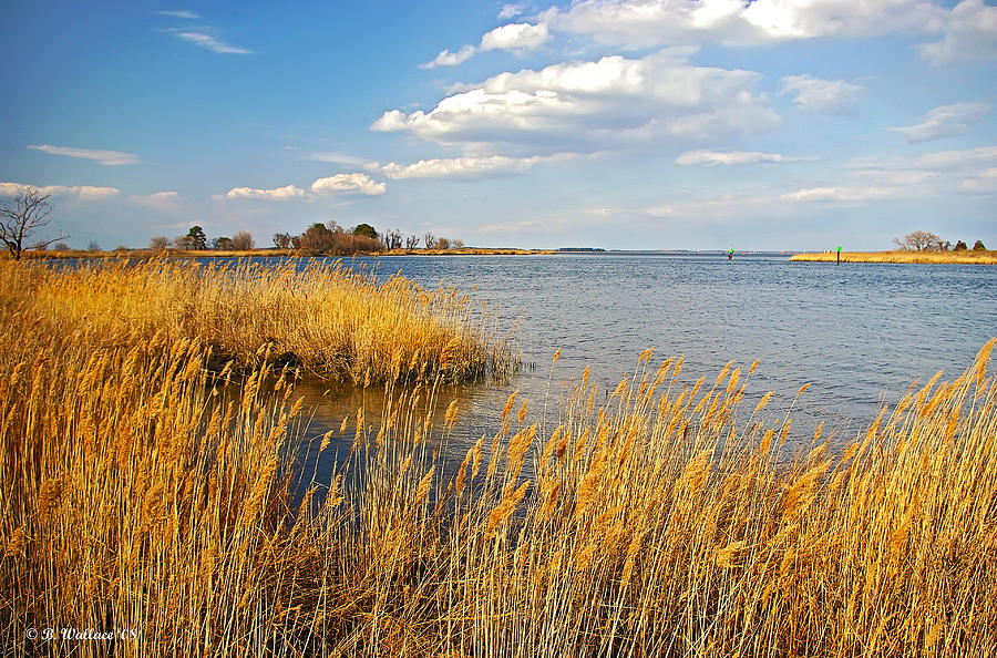 2d Photograph - Kent Island by Brian Wallace
