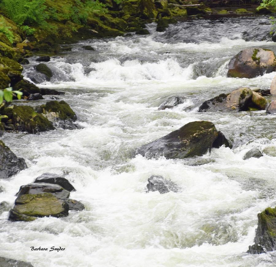 Barbara Snyder Photograph - Ketchikan Creek Of Creek Street Detail by Barbara Snyder