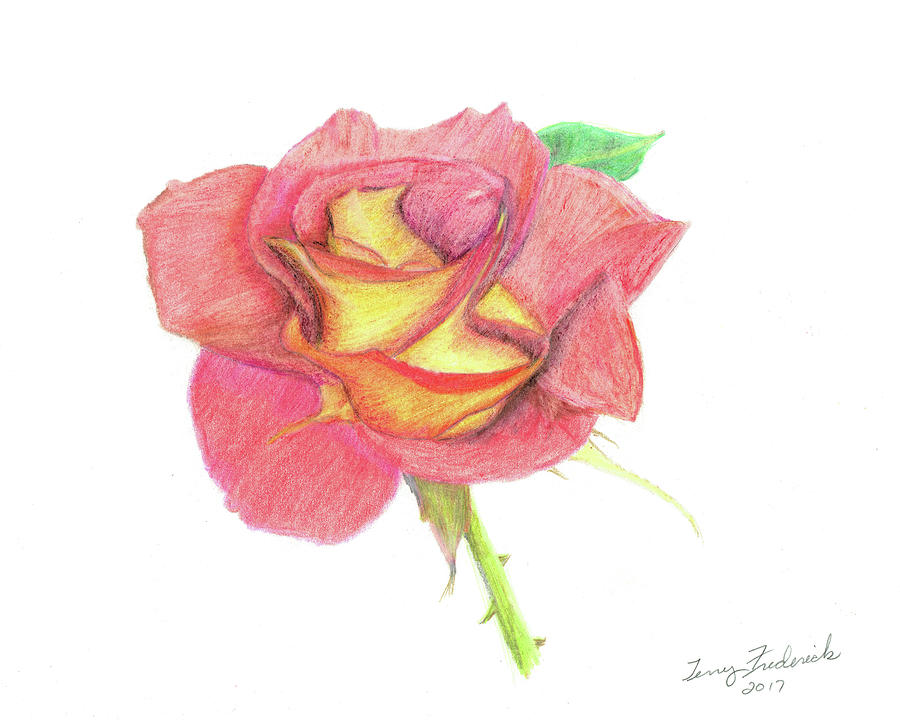 Ketchup and Mustard Rose by Terry Frederick