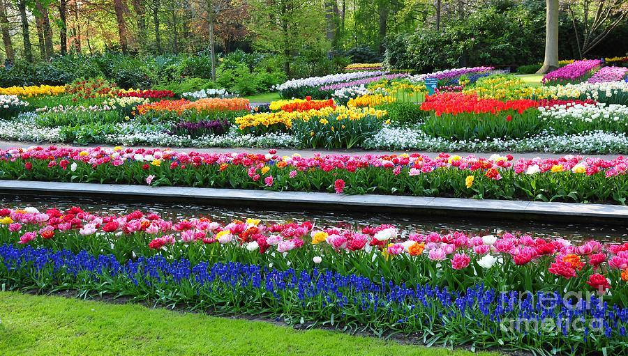 Agriculture Photograph - Keukenhof Tulips ornamental garden  by Akshay Thaker