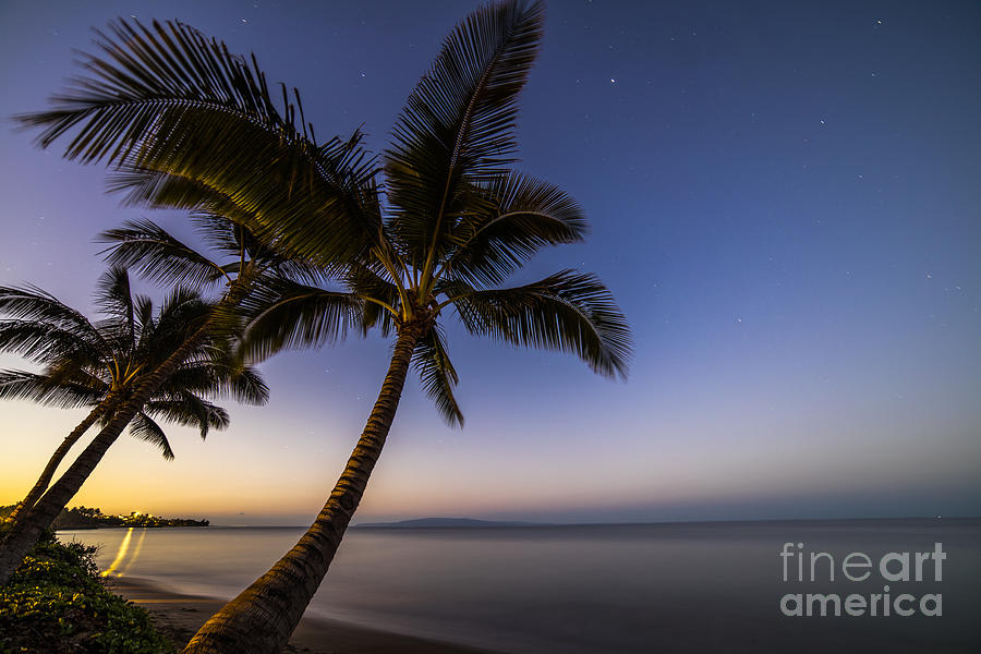 Kihei Maui Hawaii Palm Tree Sunrise Photograph By Dustin K