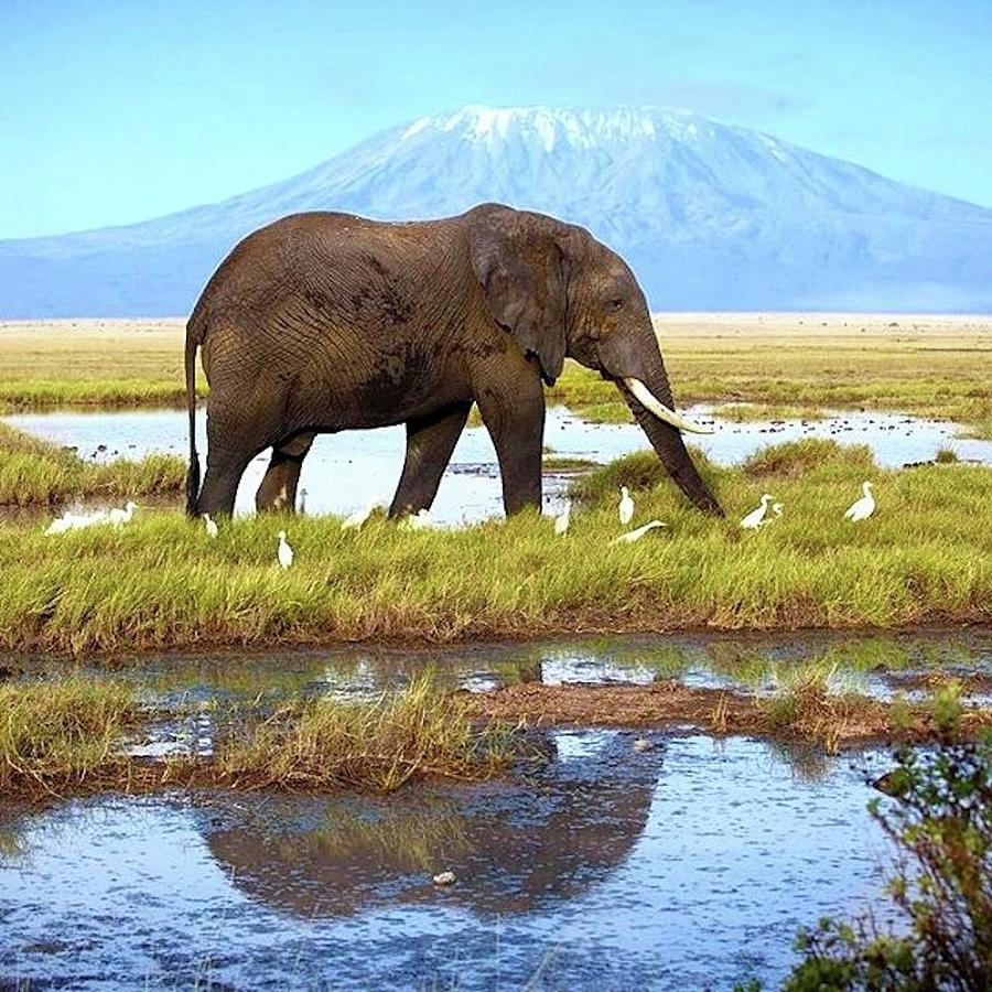 Kilimanjaro Mountain Photograph